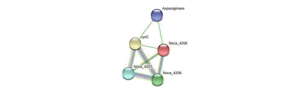 Noca_4206 protein (Nocardioides sp. JS614) - STRING interaction network