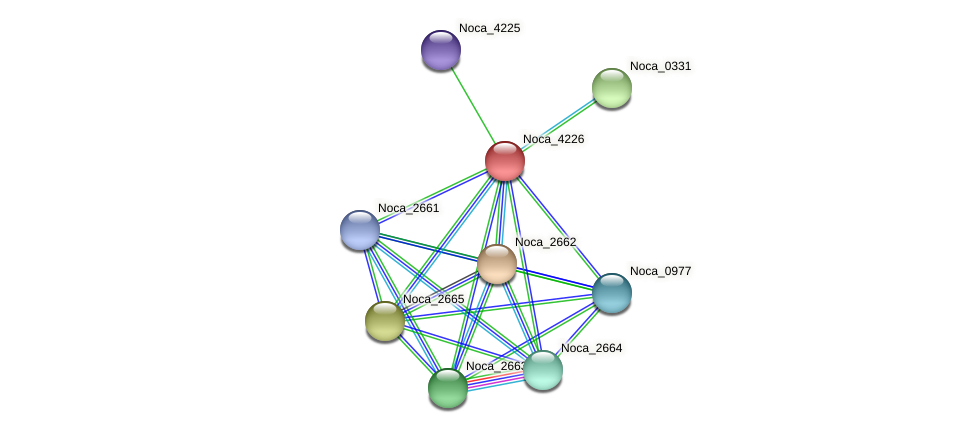 Noca_4226 protein (Nocardioides sp. JS614) - STRING interaction network