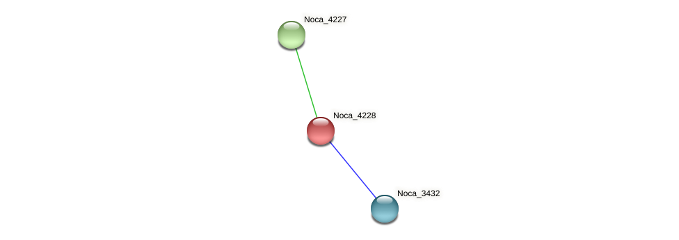 Noca_4228 protein (Nocardioides sp. JS614) - STRING interaction network