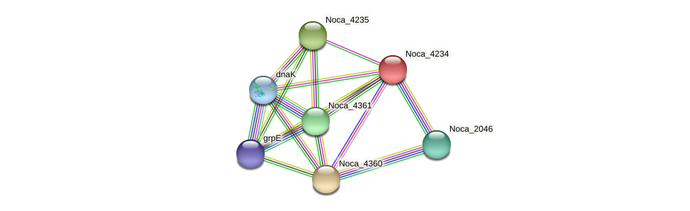 Noca_4234 protein (Nocardioides sp. JS614) - STRING interaction network