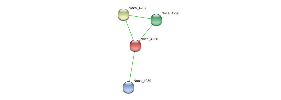 Noca_4238 protein (Nocardioides sp. JS614) - STRING interaction network
