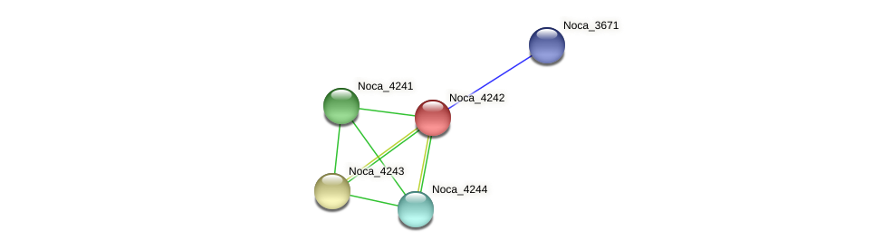 Noca_4242 protein (Nocardioides sp. JS614) - STRING interaction network