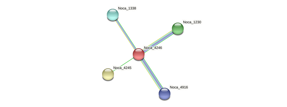 Noca_4246 protein (Nocardioides sp. JS614) - STRING interaction network