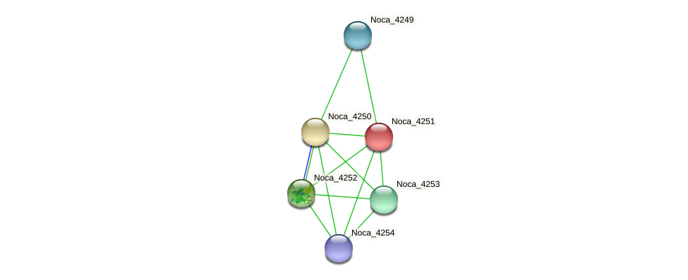 Noca_4251 protein (Nocardioides sp. JS614) - STRING interaction network