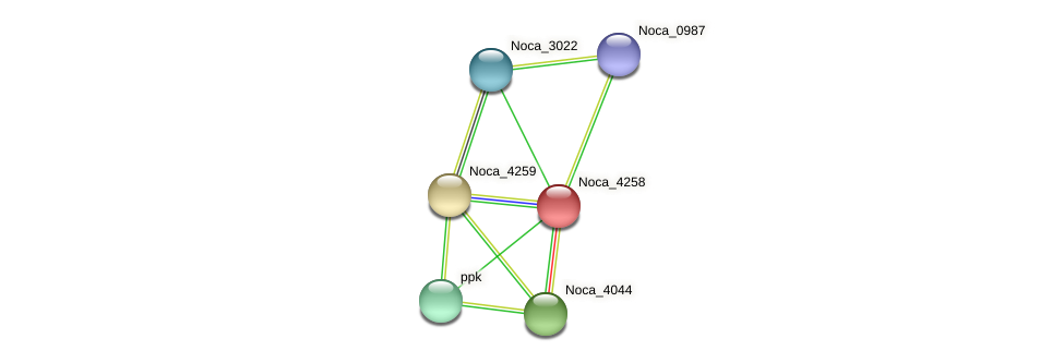 Noca_4258 protein (Nocardioides sp. JS614) - STRING interaction network