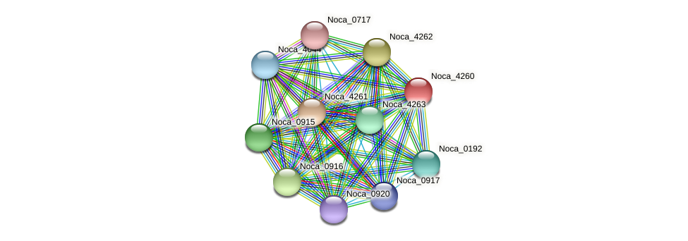 Noca_4260 protein (Nocardioides sp. JS614) - STRING interaction network