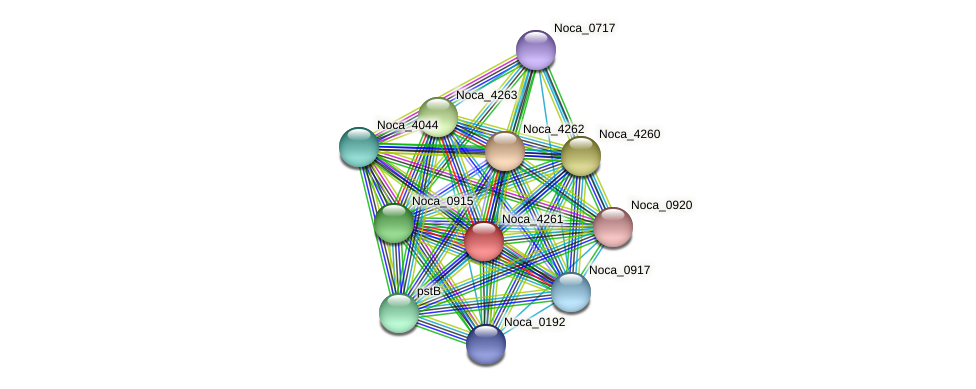 Noca_4261 protein (Nocardioides sp. JS614) - STRING interaction network