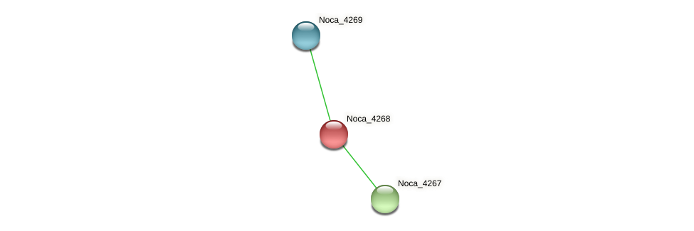 Noca_4268 protein (Nocardioides sp. JS614) - STRING interaction network