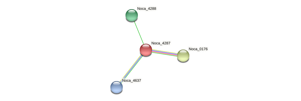 Noca_4287 protein (Nocardioides sp. JS614) - STRING interaction network