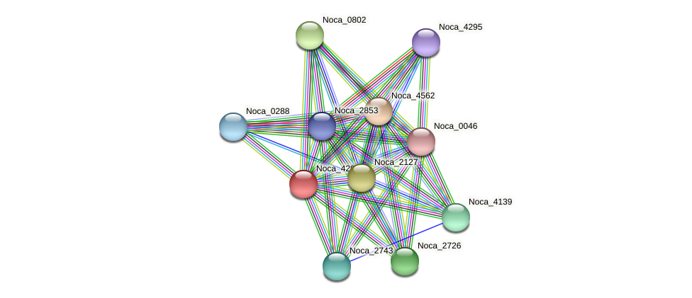 Noca_4292 protein (Nocardioides sp. JS614) - STRING interaction network