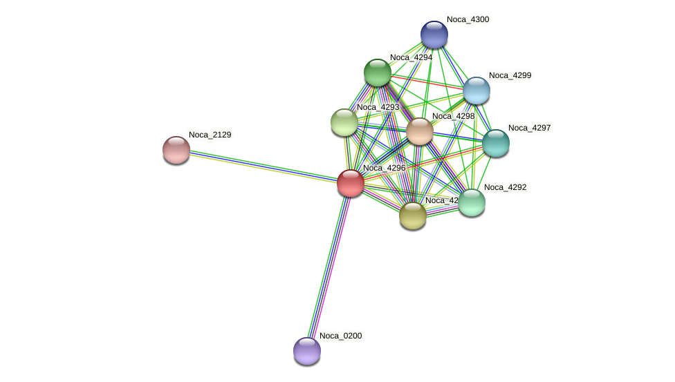 Noca_4296 protein (Nocardioides sp. JS614) - STRING interaction network