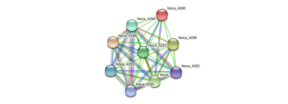 Noca_4300 protein (Nocardioides sp. JS614) - STRING interaction network