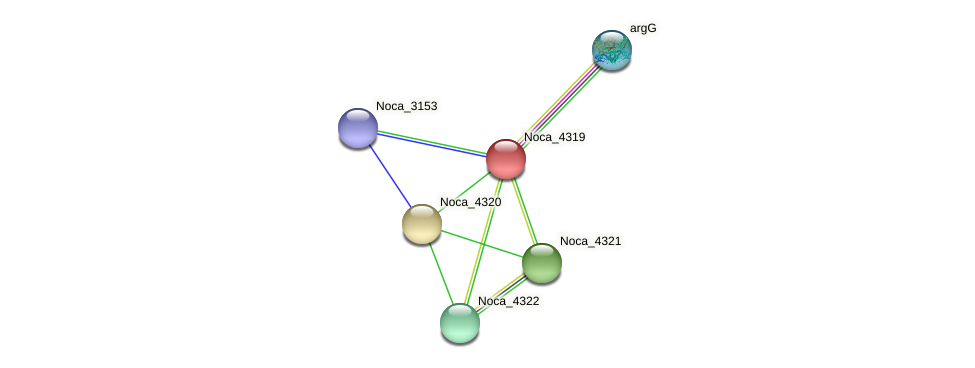 Noca_4319 protein (Nocardioides sp. JS614) - STRING interaction network