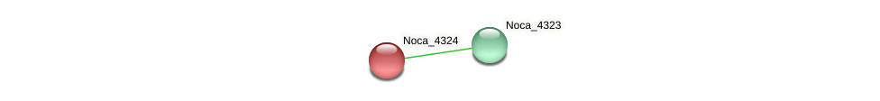 Noca_4324 protein (Nocardioides sp. JS614) - STRING interaction network