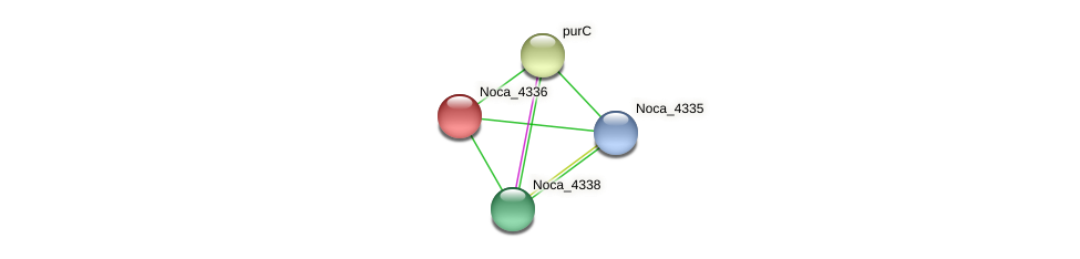 Noca_4336 protein (Nocardioides sp. JS614) - STRING interaction network
