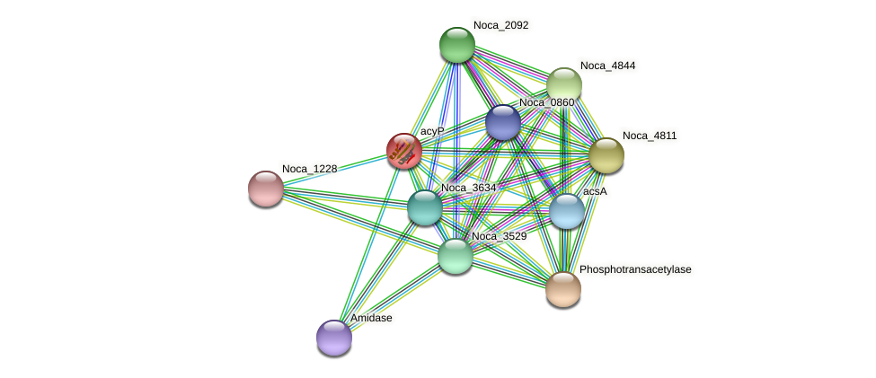 acyP protein (Nocardioides sp. JS614) - STRING interaction network