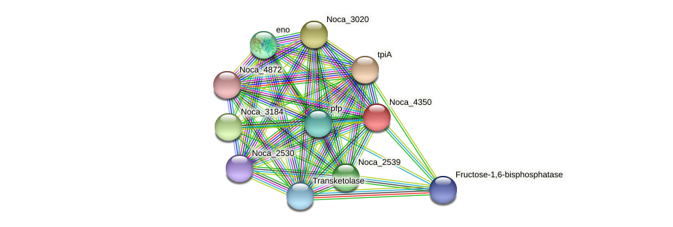 Noca_4350 protein (Nocardioides sp. JS614) - STRING interaction network
