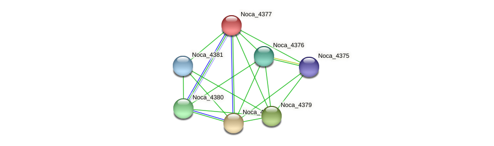 Noca_4377 protein (Nocardioides sp. JS614) - STRING interaction network