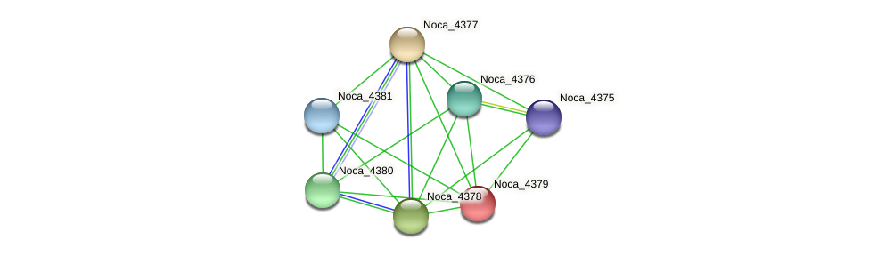 Noca_4379 protein (Nocardioides sp. JS614) - STRING interaction network