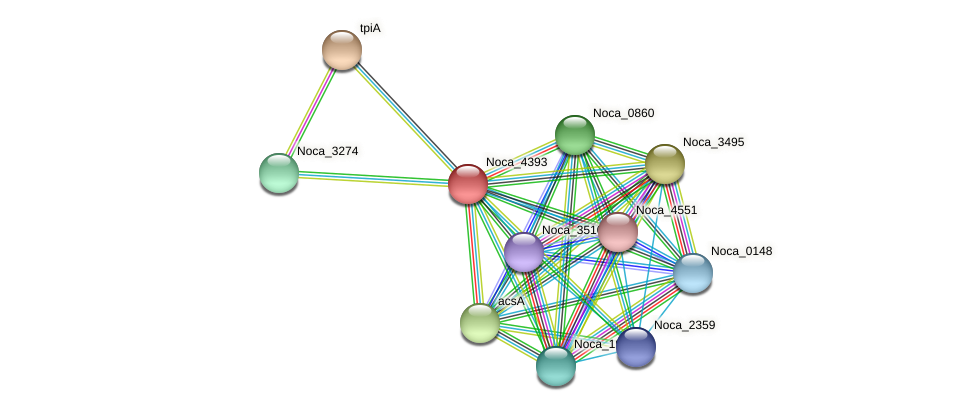 Noca_4393 protein (Nocardioides sp. JS614) - STRING interaction network