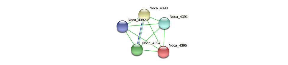 Noca_4395 protein (Nocardioides sp. JS614) - STRING interaction network