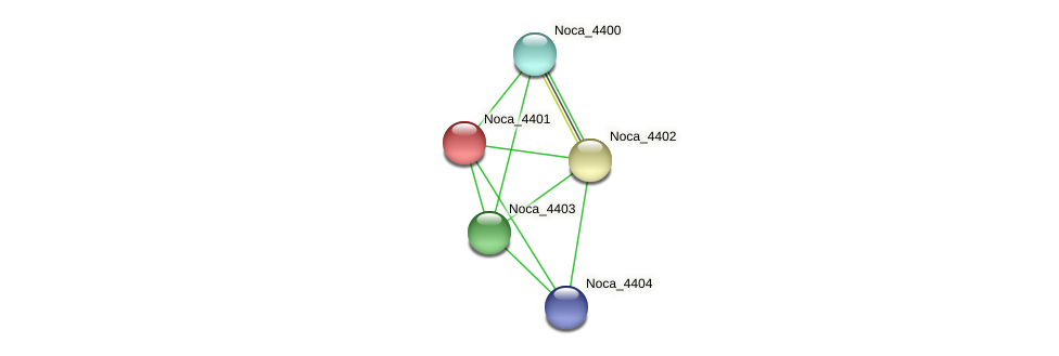 Noca_4401 protein (Nocardioides sp. JS614) - STRING interaction network