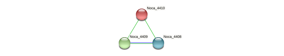 Noca_4410 protein (Nocardioides sp. JS614) - STRING interaction network
