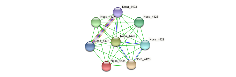 Noca_4424 protein (Nocardioides sp. JS614) - STRING interaction network