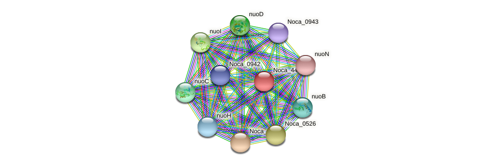Noca_4427 protein (Nocardioides sp. JS614) - STRING interaction network