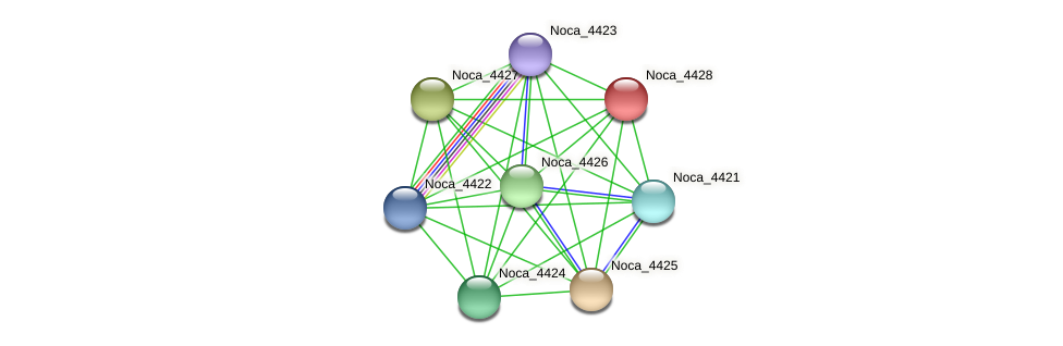 Noca_4428 protein (Nocardioides sp. JS614) - STRING interaction network