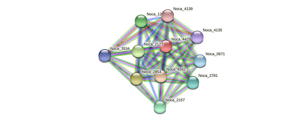 Noca_4429 protein (Nocardioides sp. JS614) - STRING interaction network