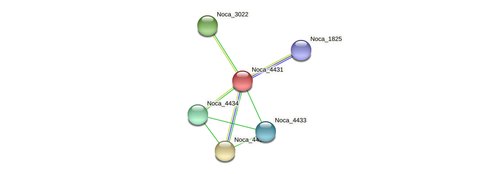 Noca_4431 protein (Nocardioides sp. JS614) - STRING interaction network