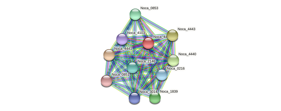 Noca_4442 protein (Nocardioides sp. JS614) - STRING interaction network
