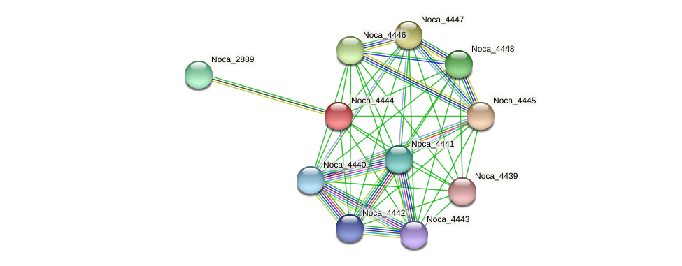 Noca_4444 protein (Nocardioides sp. JS614) - STRING interaction network