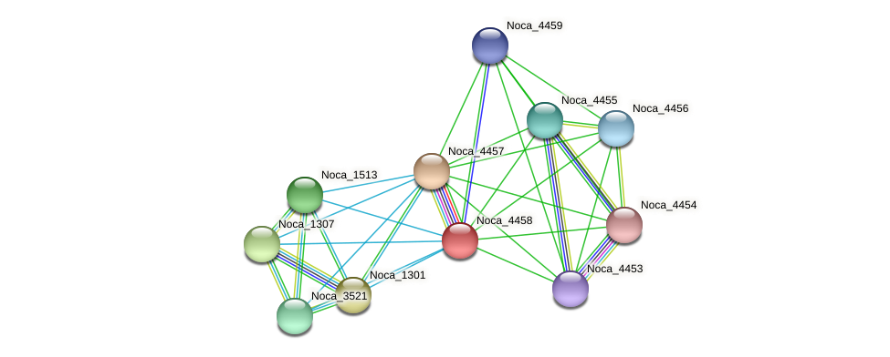 Noca_4458 protein (Nocardioides sp. JS614) - STRING interaction network