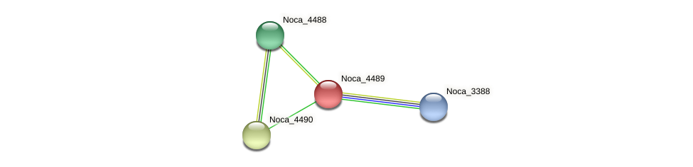 Noca_4489 protein (Nocardioides sp. JS614) - STRING interaction network