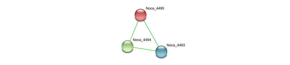 Noca_4495 protein (Nocardioides sp. JS614) - STRING interaction network
