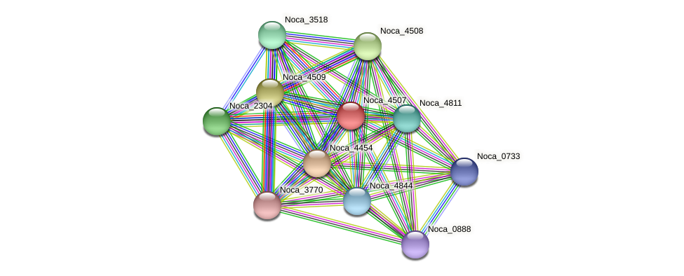 Noca_4507 protein (Nocardioides sp. JS614) - STRING interaction network