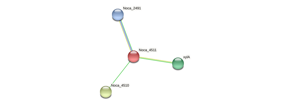 Noca_4511 protein (Nocardioides sp. JS614) - STRING interaction network