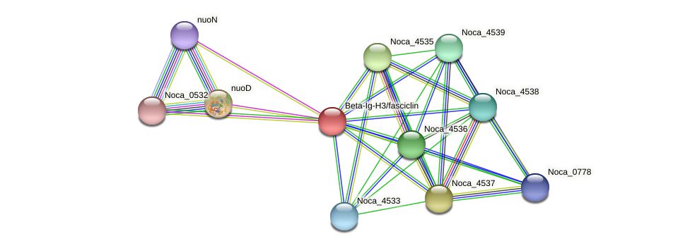 Noca_4534 protein (Nocardioides sp. JS614) - STRING interaction network