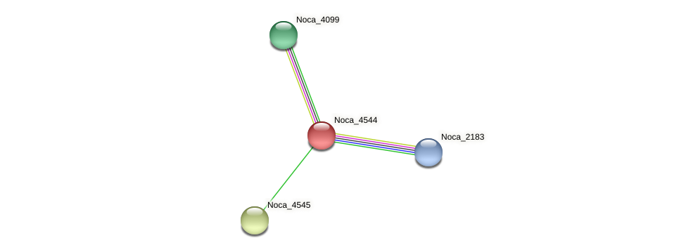 Noca_4544 protein (Nocardioides sp. JS614) - STRING interaction network