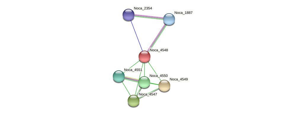 Noca_4548 protein (Nocardioides sp. JS614) - STRING interaction network