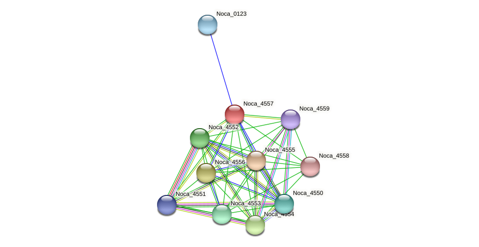 Noca_4557 protein (Nocardioides sp. JS614) - STRING interaction network