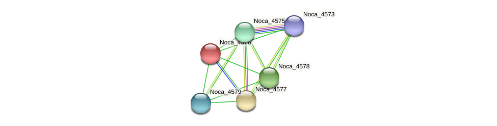 Noca_4576 protein (Nocardioides sp. JS614) - STRING interaction network