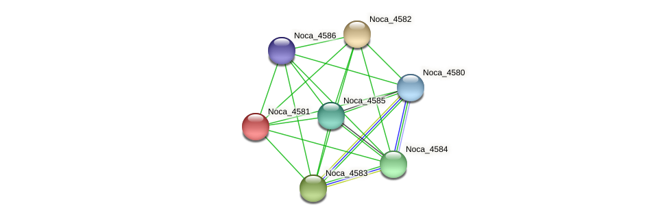 Noca_4581 protein (Nocardioides sp. JS614) - STRING interaction network