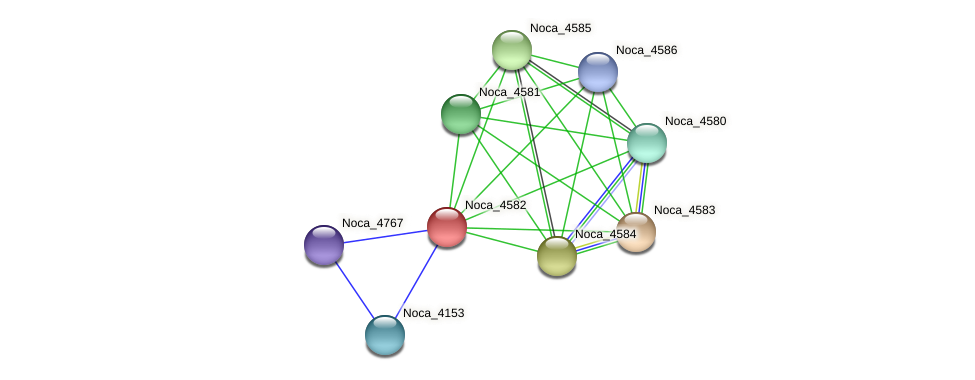 Noca_4582 protein (Nocardioides sp. JS614) - STRING interaction network