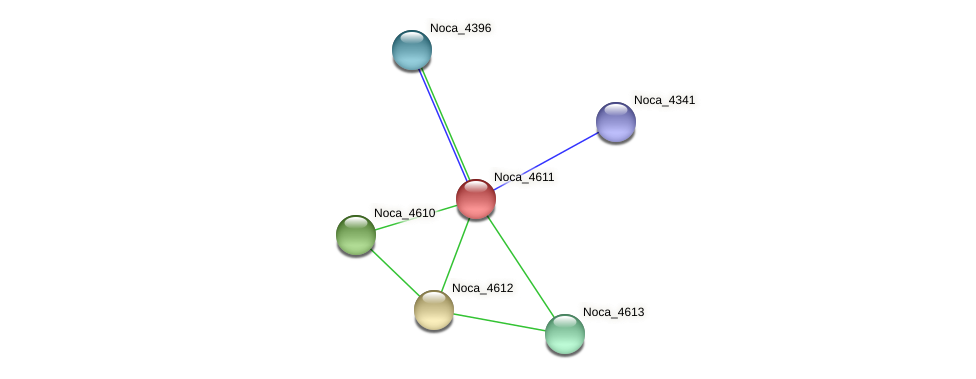 Noca_4611 protein (Nocardioides sp. JS614) - STRING interaction network