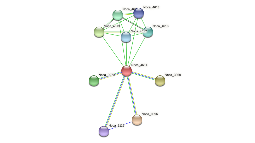 Noca_4614 protein (Nocardioides sp. JS614) - STRING interaction network