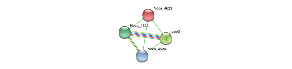 Noca_4623 protein (Nocardioides sp. JS614) - STRING interaction network
