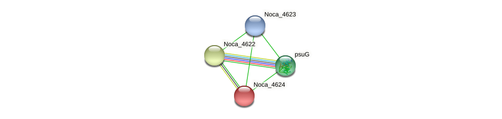 Noca_4624 protein (Nocardioides sp. JS614) - STRING interaction network